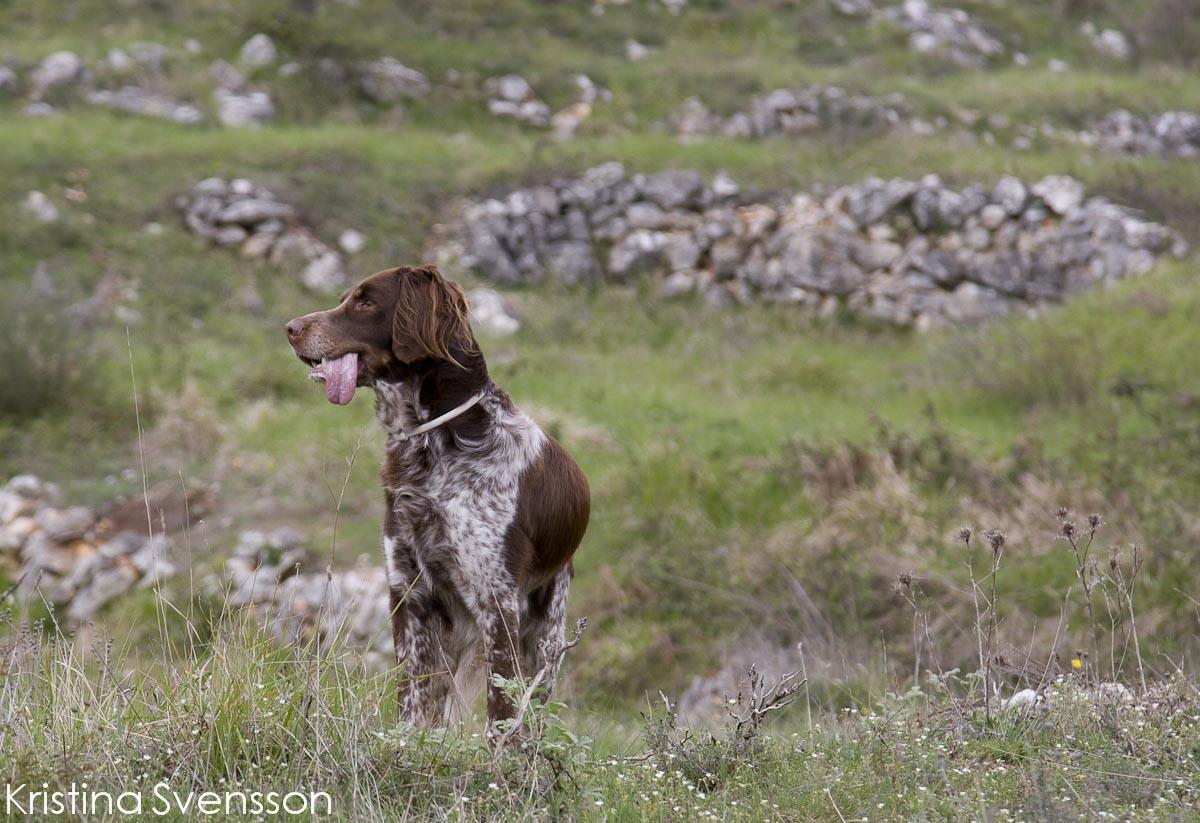 hund-2219